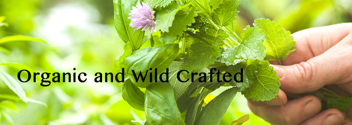 KidsWellness organic and wild crafted herbal remedies
